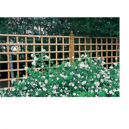 Trellis Pane Dip Treated 1220mm X 1828mm